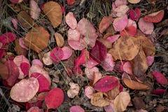 Πολύχρωμα πεσμένα φύλλα στη χλόη με τις πτώσεις της δροσιάς Στοκ εικόνα με δικαίωμα ελεύθερης χρήσης