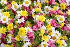 Πολύχρωμη ανασκόπηση λουλουδιών Στοκ Εικόνες