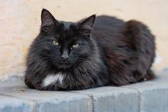 Πολύχρωμη γάτα που βρίσκεται στο πεζοδρόμιο στην οδό στοκ εικόνα
