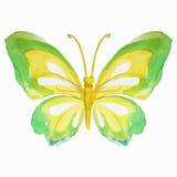 Πολύχρωμη πεταλούδα Watercolor επίσης corel σύρετε το διάνυσμα απεικόνισης Στοκ Εικόνα