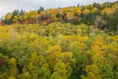 Πολύχρωμο δέντρο φθινοπώρου Στοκ φωτογραφίες με δικαίωμα ελεύθερης χρήσης