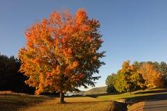 πολύχρωμο δέντρο Στοκ φωτογραφία με δικαίωμα ελεύθερης χρήσης