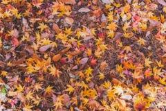 Πολύχρωμο μειωμένο φύλλο στην εποχή φθινοπώρου Στοκ εικόνα με δικαίωμα ελεύθερης χρήσης
