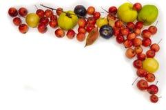 Πολύχρωμο πλαίσιο μούρων φρούτων για τις συνταγές στοκ εικόνα