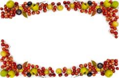 Πολύχρωμο πλαίσιο μούρων φρούτων Υψηλή ανάλυση για τις συνταγές στοκ εικόνα