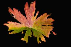 πολύχρωμο φύλλο φθινοπώρου Στοκ φωτογραφίες με δικαίωμα ελεύθερης χρήσης