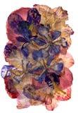 Πολύχρωμο applique των ξηρών πιεσμένων λουλουδιών ίριδων Στοκ εικόνες με δικαίωμα ελεύθερης χρήσης