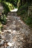 Πολύ δύσκολος δρόμος στη μέση του δάσους υπάρχουν τόνοι των μικρών πετρών, βράχοι, άμμοι στο έδαφος Ο τουρίστας θα έχει ένα adven Στοκ Φωτογραφίες