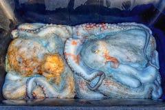Πολύ μεγάλο ακατέργαστο χταπόδι Έννοια-παραδοσιακά ελληνικά τρόφιμα την καθαρή Δευτέρα διακοπών στοκ εικόνες