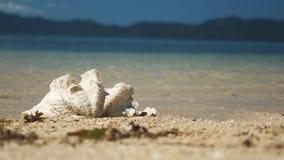 Πολύ μεγάλο κοχύλι θάλασσας στο νερό σε μια τροπική παραλία στις Φιλιππίνες απόθεμα βίντεο