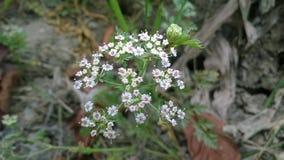 Πολύ μικρά λουλούδια Στοκ εικόνα με δικαίωμα ελεύθερης χρήσης