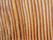 Πολύ παλαιά ασημένια ξύλινη σύσταση φλοιών στοκ εικόνες