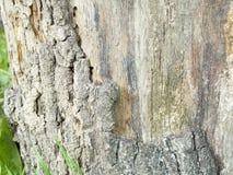 Πολύ παλαιά ασημένια ξύλινη σύσταση φλοιών στοκ εικόνες με δικαίωμα ελεύθερης χρήσης