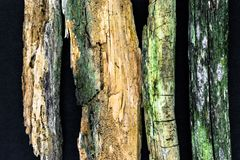 Πολύ παλαιοί και σκουριασμένοι ξύλινοι κλάδοι στη μαύρη επιφάνεια υποβάθρου Κύρια εστίαση στο μεγαλύτερο κλάδο, άλλοι κλάδοι - πο Στοκ φωτογραφία με δικαίωμα ελεύθερης χρήσης