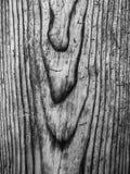 Πολύ παλαιός στενός επάνω ξύλου πεύκων σε γραπτό Στοκ Φωτογραφίες