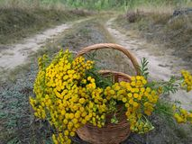 Πολύ συμπαθητικό ξύλινο καλάθι που γεμίζουν με τα κίτρινα λουλούδια στοκ εικόνες με δικαίωμα ελεύθερης χρήσης