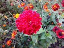 Πολύ όμορφο κόκκινο λουλούδι στοκ φωτογραφίες