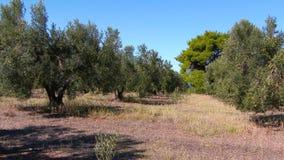 Πολύ όμορφο τοπίο της Ελλάδας φιλμ μικρού μήκους
