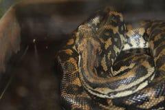 Πολύ όμορφο φίδι στοκ εικόνες με δικαίωμα ελεύθερης χρήσης
