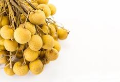 Πολύ longan πρόστιμο της Ασίας φρούτων σε έναν κλάδο σε ένα άσπρο υπόβαθρο Στοκ Φωτογραφία