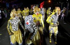 Πομπή χορού τιγρών Στοκ Φωτογραφία