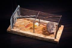 Ποντίκια που πιάνονται στην ποντικοπαγήδα Στοκ εικόνα με δικαίωμα ελεύθερης χρήσης