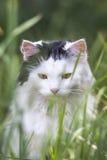 Ποντίκι, άδεια! Στοκ φωτογραφία με δικαίωμα ελεύθερης χρήσης