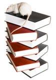 ποντίκι βιβλίων στοκ φωτογραφίες