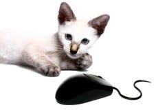 ποντίκι γατών Στοκ Εικόνες