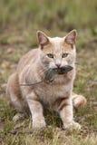 ποντίκι παιχνιδιών γατών Στοκ Εικόνα