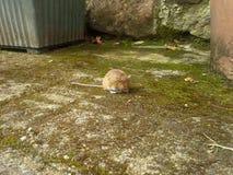 Ποντίκι στο ναυπηγείο Στοκ φωτογραφία με δικαίωμα ελεύθερης χρήσης
