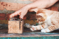 Ποντίκι σύλληψης γατακιών Στοκ εικόνες με δικαίωμα ελεύθερης χρήσης