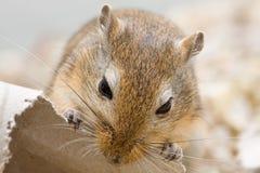 ποντίκι δαγκωμάτων Στοκ φωτογραφία με δικαίωμα ελεύθερης χρήσης