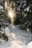 Πορεία αναμμένη από τον ήλιο ρύθμισης στο χειμερινό δάσος στοκ φωτογραφία
