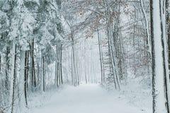 Πορεία αν και χιονισμένο δάσος Στοκ Εικόνες