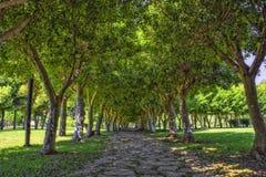Πορεία βράχων κάτω από τα πράσινα δέντρα στο πάρκο παραλιών antalya Τουρκία Στοκ φωτογραφίες με δικαίωμα ελεύθερης χρήσης