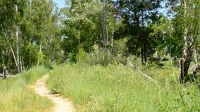 Πορεία και λιβάδι στο πράσινο δάσος το καλοκαίρι φιλμ μικρού μήκους