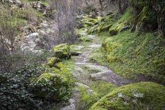 Πορεία και πέτρες βουνών με το βρύο Στοκ Φωτογραφίες