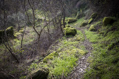 Πορεία και πέτρες βουνών με το βρύο Στοκ Εικόνες