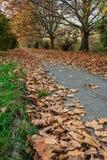 Πορεία κατά μήκος των δέντρων το πρόωρο φθινόπωρο Στοκ φωτογραφίες με δικαίωμα ελεύθερης χρήσης