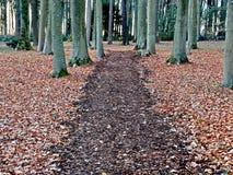Πορεία μέσω ενός δάσους στοκ εικόνες με δικαίωμα ελεύθερης χρήσης