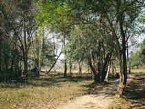 Πορεία μέσω της τροπικής ζούγκλας στην Καμπότζη Στοκ φωτογραφία με δικαίωμα ελεύθερης χρήσης