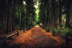 Πορεία μέσω του δάσους, εθνικό πάρκο Yosemite, Καλιφόρνια Στοκ Φωτογραφία