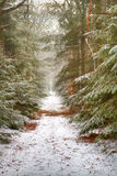 Πορεία μέσω του δάσους το χειμώνα Στοκ εικόνες με δικαίωμα ελεύθερης χρήσης