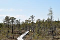 Πορεία μέσω του έλους Στοκ εικόνες με δικαίωμα ελεύθερης χρήσης