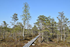 Πορεία μέσω του έλους Στοκ φωτογραφία με δικαίωμα ελεύθερης χρήσης