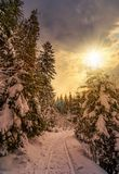 Πορεία μέσω του κομψού δάσους το χειμώνα στο ηλιοβασίλεμα Στοκ Φωτογραφίες