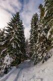 Πορεία μέσω του κομψού δάσους το χειμώνα Στοκ Φωτογραφίες