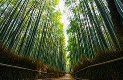 Πορεία μέσω του πολύβλαστου πράσινου δάσους του γιγαντιαίου μπαμπού σε Arashiyama στο Κιότο, Ιαπωνία Στοκ Εικόνες