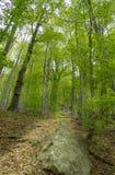 Πορεία μεταξύ των δέντρων Στοκ εικόνα με δικαίωμα ελεύθερης χρήσης